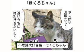 連載マンガ「田代島便り 出張版」 第15回「ほくろちゃん」