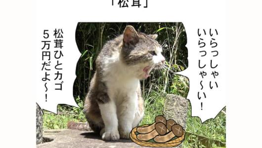 連載マンガ「田代島便り 出張版」 第16回「松茸」