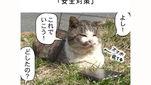 連載マンガ「田代島便り 出張版」 第17回「安全対策」