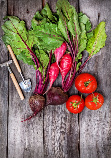 42722013 - raw beetroot, tomato, radish and garden tools on wooden background