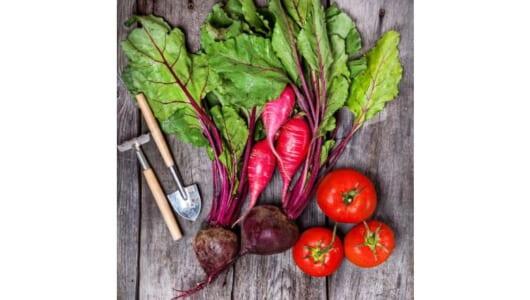 1㎡からはじめる自然菜園のススメ――家庭で無農薬野菜を失敗せずに育てるには?