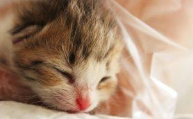 """猫も定期的にシャンプーしたほうがいい? 獣医が教える""""清潔感""""だけではない意外なメリットとは"""