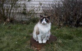 """キーポイントはモフモフの""""美人猫""""!?  スウェーデン映画「幸せなひとりぼっち」特別映像公開"""