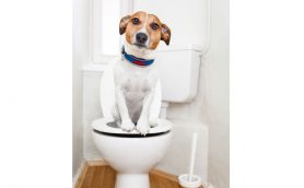 「ウォシュレット」の語源は「Let wash(レット ウォッシュ)」!? トイレにまつわる雑学3選