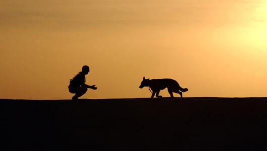 犬の伝染病が人間にも感染する? 秋冬に多い感染症「レプトスピラ症」の恐怖