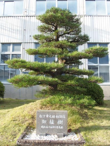 ↑幸田工場には松下幸之助氏も訪れています。こちらは訪問時に記念として植樹された松