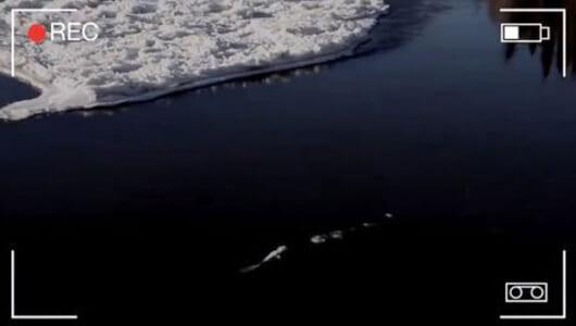 【ムーUMA情報】リバー・モンスターではないのか? 厳寒の水中をクネクネ泳ぐ巨大生物の撮影に成功!