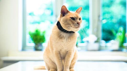 もう愛猫が迷子になっても大丈夫!Twitterで話題の猫追跡アイテム「PAWTRACK」
