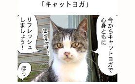 連載マンガ「田代島便り 出張版」 第31回「キャットヨガ」