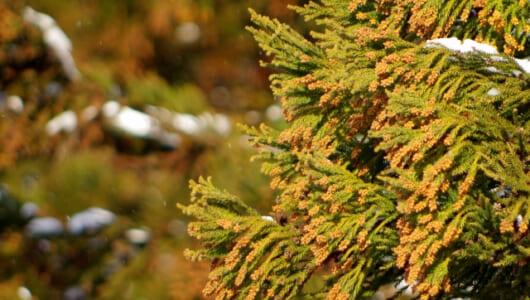日本で花粉が一番少ないのはどこだ!? 過酷なシーズンをやり過ごすための逃げ場所を考えてみよう
