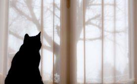 孤独な女性に寄り添う猫が切ない! 『君の名は。』新海誠デビュー作は共感必至の短編アニメだった