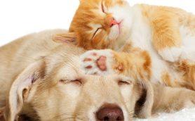 布団のなかは32℃をキープするとぐっすり眠れる! 快眠のための3つのキーワード