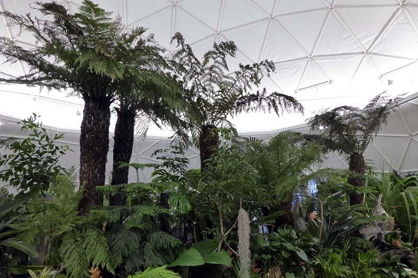 ↑ドーム内は世界各地の魅力的な樹種で彩られ、ちょっとした植物園のような空間が広がっている