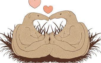 17699056 - illustration of love anteater