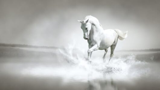 伝説として語り継がれるオグリキャップという名の怪物の正体は人懐こい芦毛の馬だった