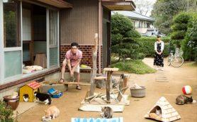 """ニャンと!リュクスな猫たちがくつろぐ""""高級物件編""""と猫背も凍る!?""""J・ホラー物件編""""の2種類の特報映像!映画「ねこあつめの家」"""