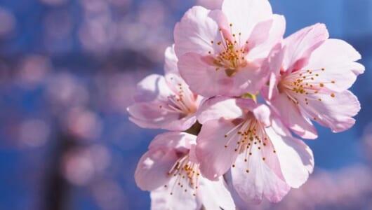 今年こそ失敗しない! プロが教える「桜」を撮るための7つのこだわり【前編】