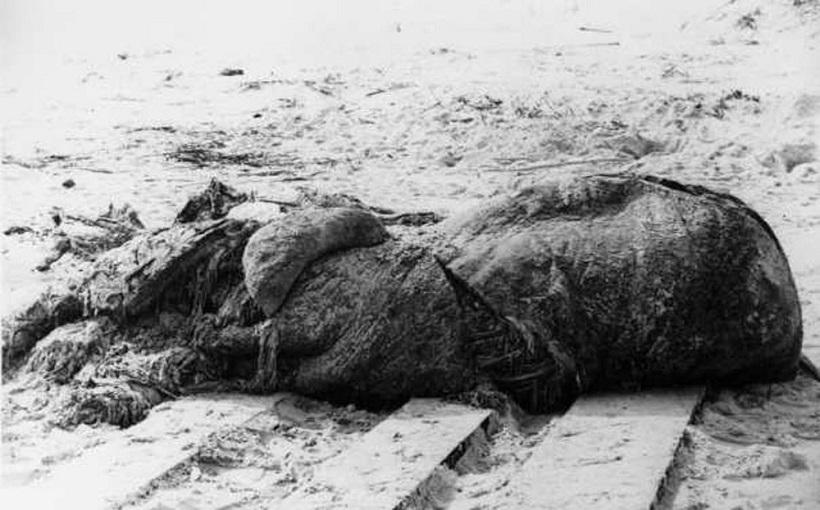↑1896年、フロリダの砂浜に漂着し、クジラの脂肪と推測された謎の物体