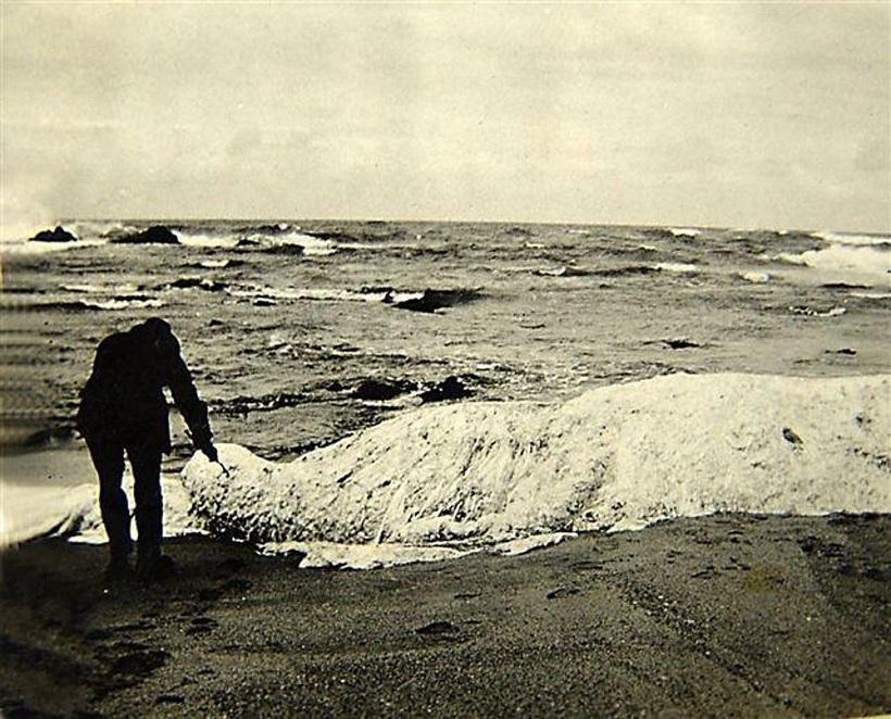 ↑1922年、南アフリカで目撃された鼻の長い生物「トランコ」の死骸