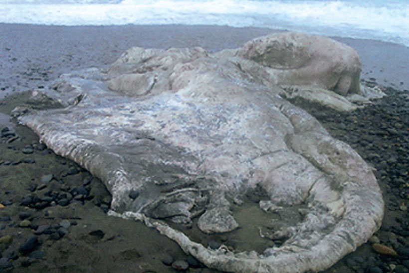 ↑2003年、チリで発見されたグロブスター