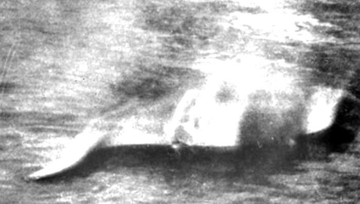 ↑1933年11月12日、会社員ヒュー・グレイが撮影したネッシーの姿