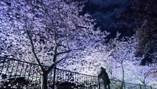 今年の桜写真はひと味違う! プロが教える「桜」を撮るための7つのこだわり【後編】