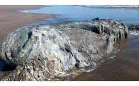 【ムーUMA情報】これは新種の「グロブスター」か? 「クジラではない何か」の死骸がメキシコのビーチに漂着!