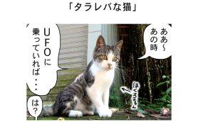 連載マンガ「田代島便り 出張版」 第37回「タラレバな猫」