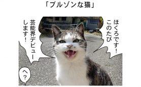 連載マンガ「田代島便り 出張版」 第38回「ブルゾンな猫」