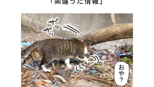 連載マンガ「田代島便り 出張版」 第39回「間違った情報」