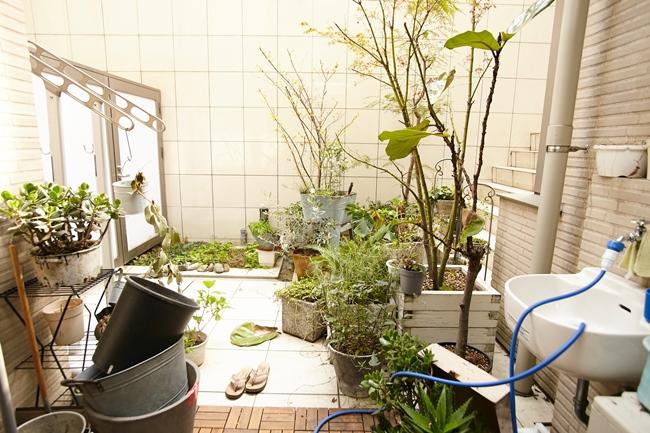 ↑光が注ぐテラスには、和洋の植物がたくさん。リビングの窓から望む景色は、まるで絵画のようでもあり、癒しを与えてくれるひとコマになっています