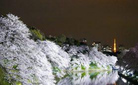 【まだ間に合う】去年とは一味違う「ほめられ桜フォト」を撮ろう