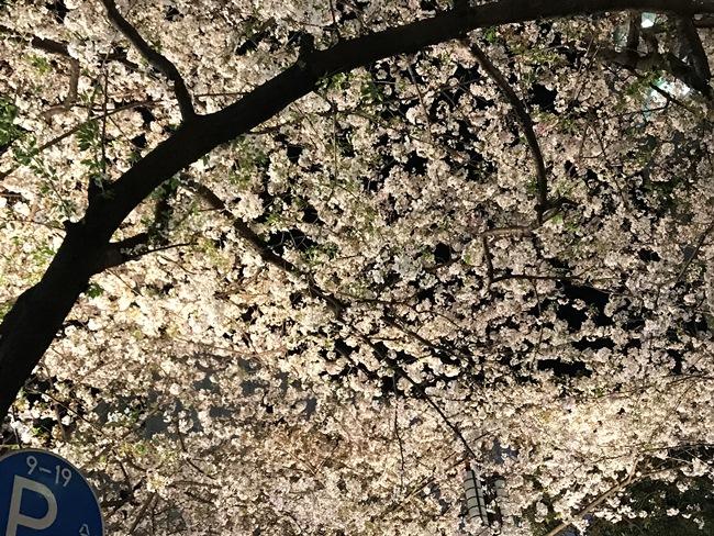 ↑これは失敗例。大きな桜の木に満開に咲いた桜を、いっぱいにおさめていますが、これではのっぺりとした印象になってしまいます