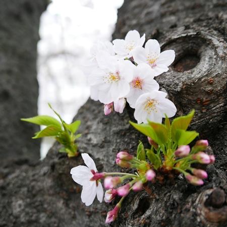 ↑ 幹から咲いている小さな花を狙う手もあり。低い位置にあるので寄って撮りやすく、花びらまでしっかり見せられます