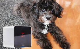 留守番もこれで安心! 外出先からペットと遊べる「Petcube Camera」がおもしろい
