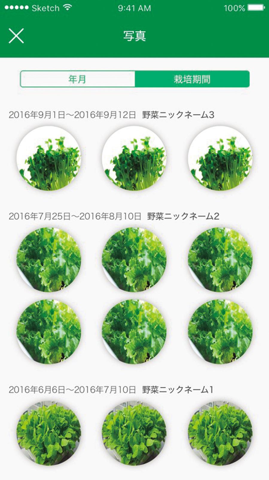 ↑種を植えて2〜3日で発芽。アプリではカメラ撮影した野菜の生長過程の一覧表示もできる