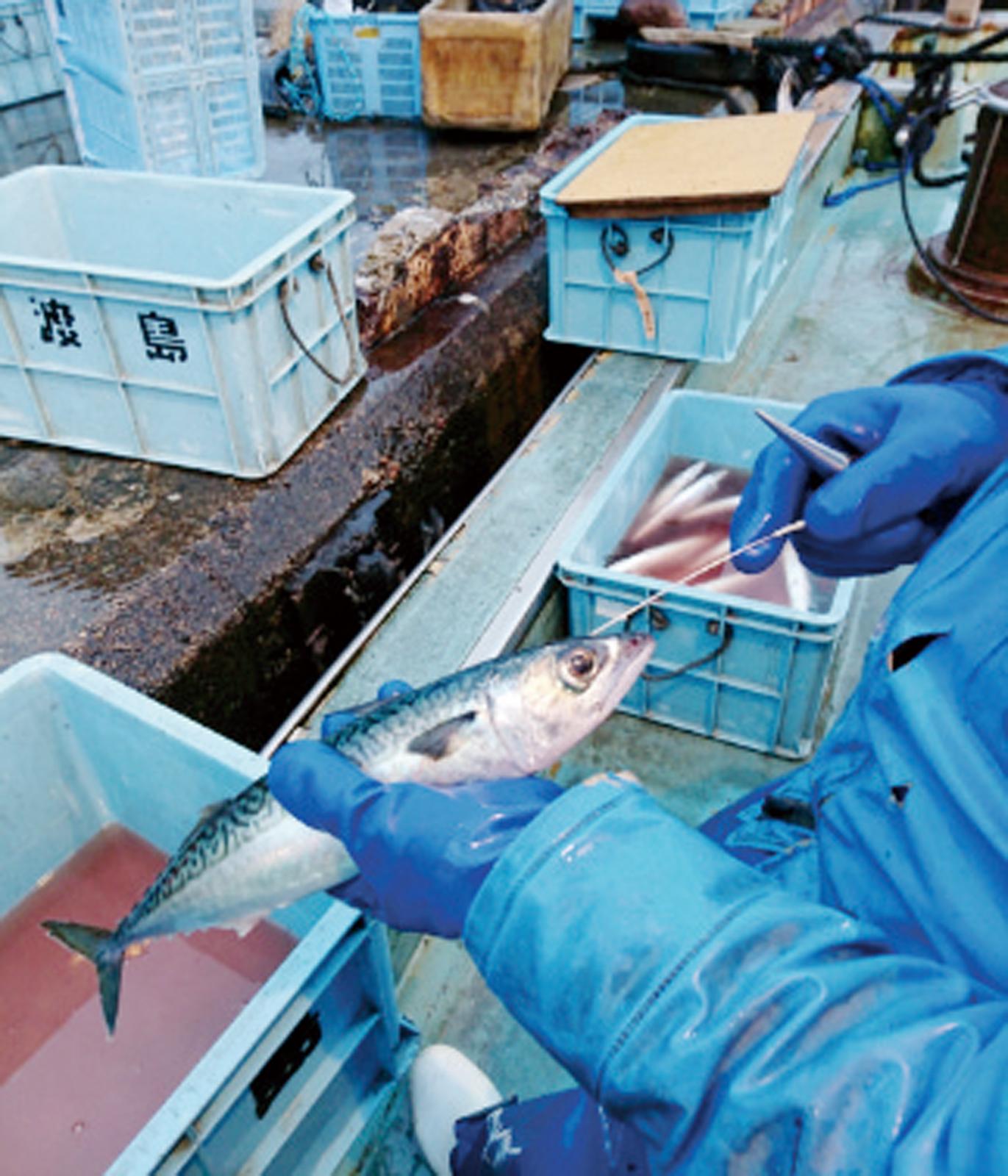 ↑ 能登地方の漁師、順毛さんから季節の鮮魚が届くセットを注文