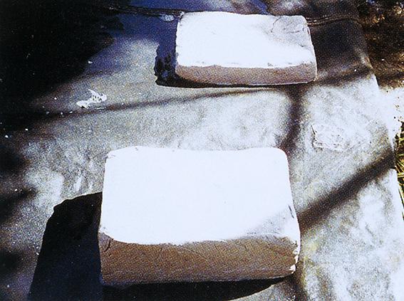 ↑素材となった天然チクル。「グリーンガム」登場に先立って、1954年に同社が日本で初めて採用したものだった