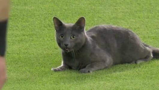 ネコが現れ、ファンはプールに飛び込む! イチロー&田澤が所属のマーリンズがとにかく面白い