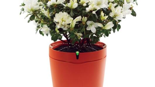 大事な植物を枯らさずに済む! 植物の「見守り」「自動で水やり」が可能な最新「IoT栽培アイテム」3選