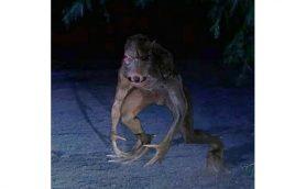 【ムーUMA情報】正体はエイリアン? プエルトリコに現れた謎の吸血怪獣「チュパカブラ」
