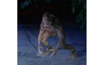 ↑1995年10月、カナノバスに出現したチュパカブラの写真