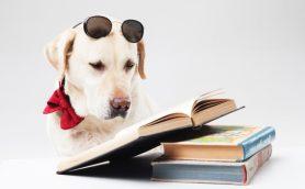 女性を惹きつけるコツは犬と沈黙に学ぶべし