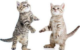 猫カフェで感じる「猫好きのジレンマ」とは?