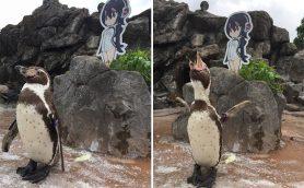 『けものフレンズ』とコラボした東武動物公園のTwitterが大人気! 嫁に逃げられて二次元に恋したペンギンとは?