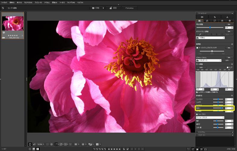 ↑「色あい:+3」に設定。黄色みが加わり、花びらはピンクになった
