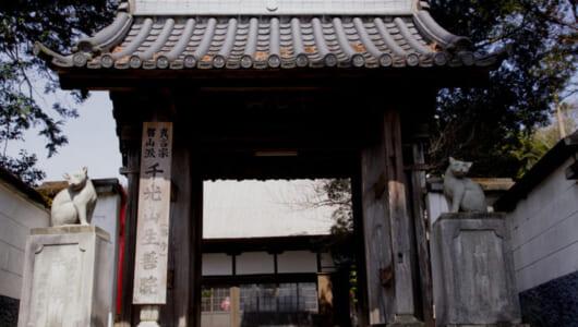 【ムー怨霊伝説】「自分の指を与え…」一人の女が猫に託した凄まじい呪いとは? 熊本の「猫寺」に伝わる化け猫の恐怖