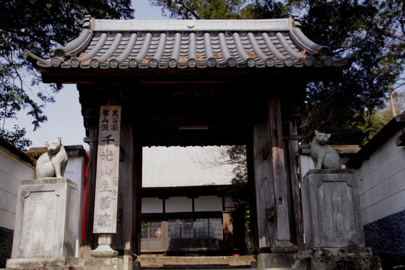 「千光山生善院(猫寺)」と掲げられた山門で出迎える「狛猫」。