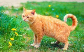 猫好きの品格。ネコにまつわる自負と熱意について