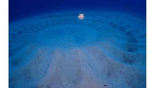 美しいサンゴ礁で不思議な魚が暮らす別世界――夏休みは奄美の海にGo!